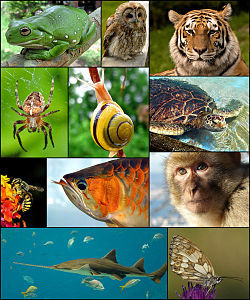 250px-Animal_diversity_October_2007